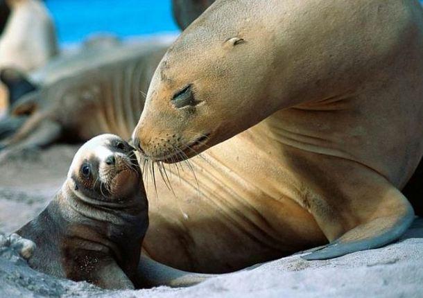 В зоопарке Ижевска родилась двойня морских котиков