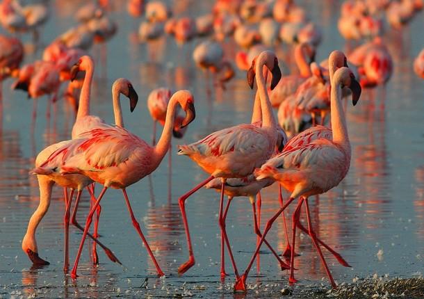 В зоопарке появились розовые фламинго